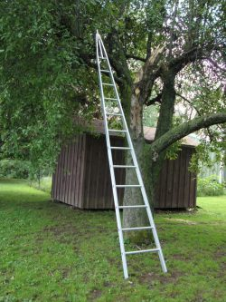 Pointed Top Orchard Ladder